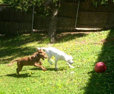 Hal Wheeler S Dog Day Care Cedar Grove Nj